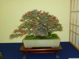 38th Gafu-ten in Kyoto 2013 - 36