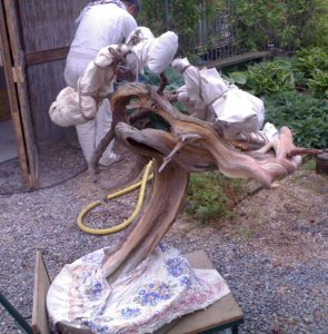 bois morts juniperus - sablage par takeo kawabe 5