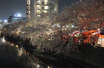 cerisiers en fleur au Japon hanami - 09