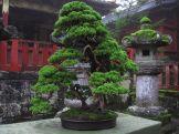 visite a nikko près de tokyo 1