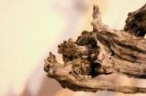 EBA 2013 France - prunus mahaleb - thierry font 15