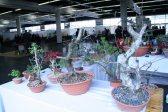 destination bonsai - christophe richy - 104