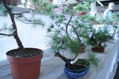 destination bonsai - christophe richy - 123