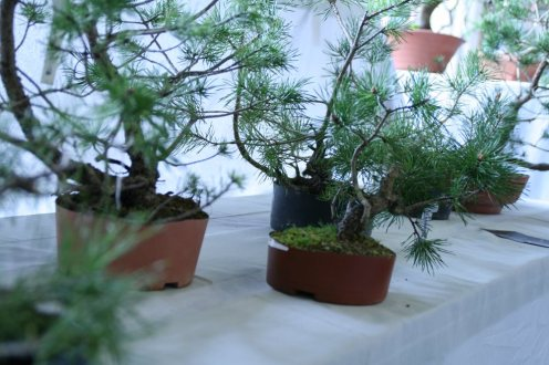 destination bonsai - christophe richy - 124