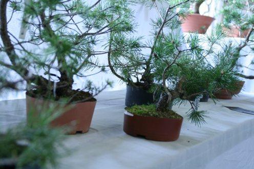 destination bonsai - christophe richy - 124