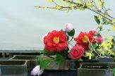 ikebana lorraine - roseau noir - 12