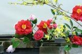 ikebana lorraine - roseau noir - 13