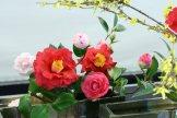 ikebana lorraine - roseau noir - 16