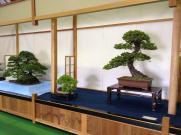 exposition bonsai japon 03 masato yamakami