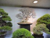 kokufu-ten 2013 - 24