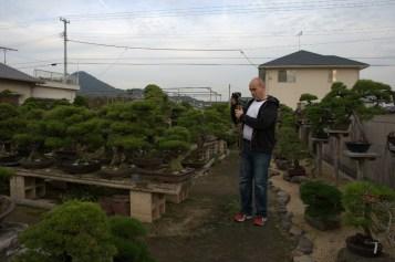 matsu bonsai seijuen