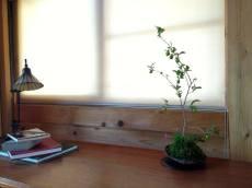 bonsai mori - tokyo - atelier bonsaï 1