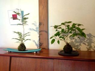 bonsai mori - tokyo - atelier kokedama 2