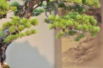 pin blanc en tokonoma - 05