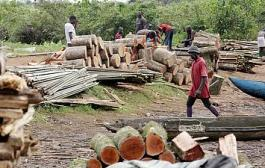 SENEGAL :  les autorisations de coupe de bois suspendues