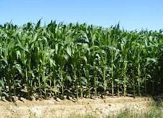 Le domaine agricole de Sangalkam financé pour 6,5 milliards