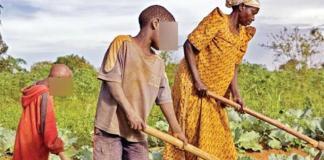 L'accaparement des terres au Sénégal