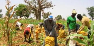 Le secteur horticole sénégalais