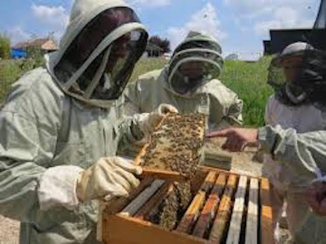 Productions apicoles du Sénégal