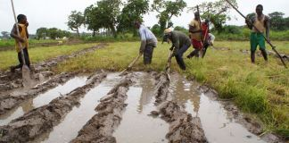 La production agricole de la Guinée-Bissau