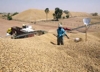 Suspension de la taxe à l'exportation sur l'arachide