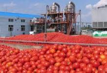 Une nouvelle usine de tomate à Saint-Louis -Dagana