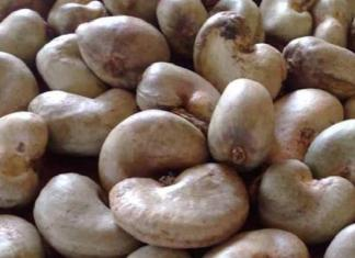 Commercialisation des noix de c'anacarde