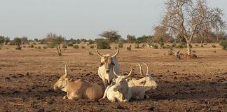 Restaurer l'écosystème du Ferlo par l'irrigation