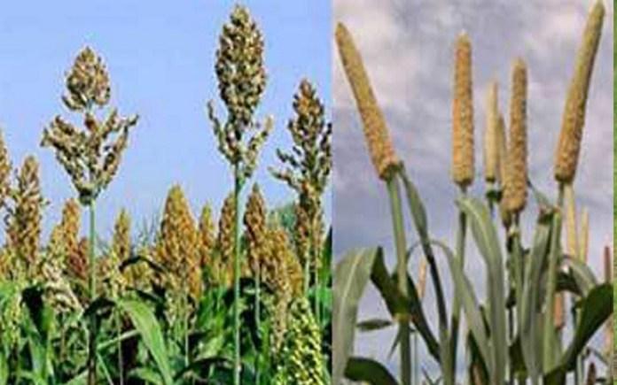 Hausse de la production céréalière au Sénégal