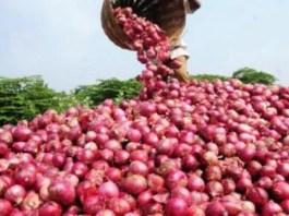 Risques de mévente de l'oignon de Potou au Sénégal
