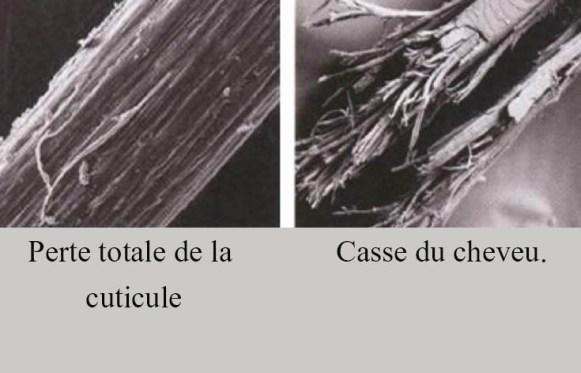 CUTICULE3-1