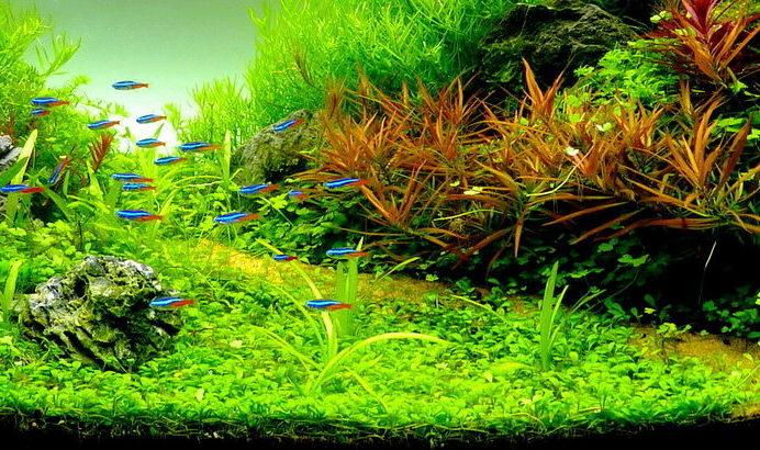 4 increíbles plantas tapizantes para acuarios