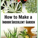 How To Make An Indoor Succulent Dish Garden