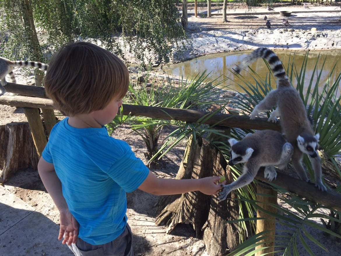 Safari Wilderness Ranch with kids | reasons to take your kids on safrari in Florida