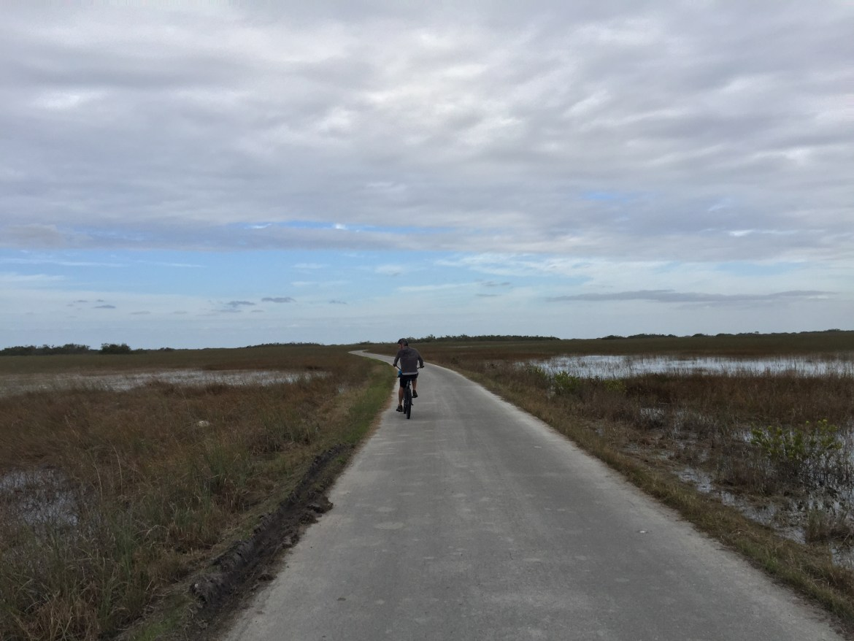 Everglades National Park | Shark Valley | Biking through the Everglades | Florida parks | South Florida must do | outdoor activities in Miami Florida | Florida Everglades | Where to see alligators in FLorida | Acupful.com | Family travel blog