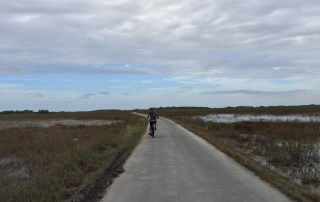 Everglades National Park | Shark Valley | Biking through the Everglades | Florida parks | South Florida must do | outdoor activities in Miami Florida | Florida Everglades | Where to see alligators in FLorida | Acupful.com | Family travel blog