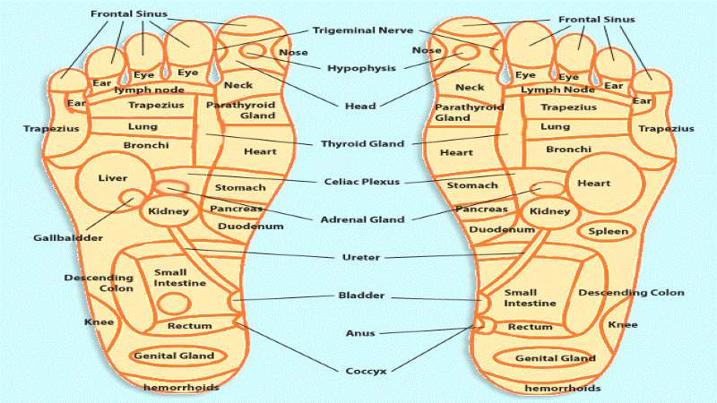 acupuncture foot chart: Acupressure points chart for relieving pain acupressure points