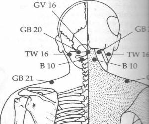 Urinary Bladder 10