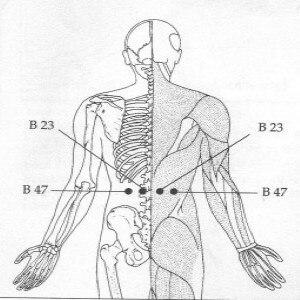Sea of Vitality also known as the Lower Back Pressure Points
