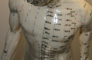 Male-acupuncture-model-whole-body-front