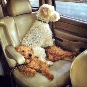 sleeping dogs car ride