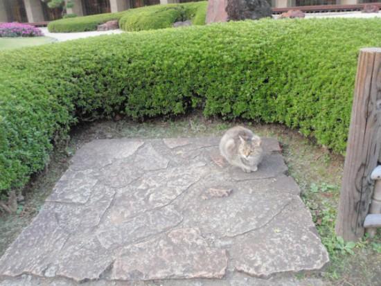 日本庭園に放し飼いされたねこ?