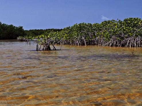 photo credit: Low Water at Long Key Lakes via photopin (license)