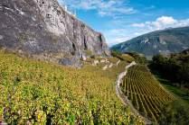 Sonnenseite: An fast allen Hügeln des Rhônetals wächst Wein.