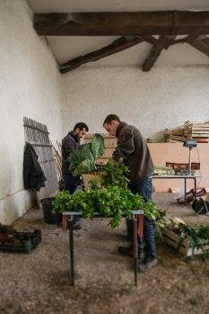 Blattmacher: Das sorgsam gepflegte Gemüse aus dem Garten Marie-Antoinettes wird in die Küche des Meisterkochs Alain Ducasse geliefert, der die reine Natur wieder auf den Teller bringen und Gourmets zu umweltverträglicher, fleischloser Kost ermuntern möchte.