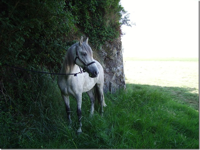 image cheval Luis