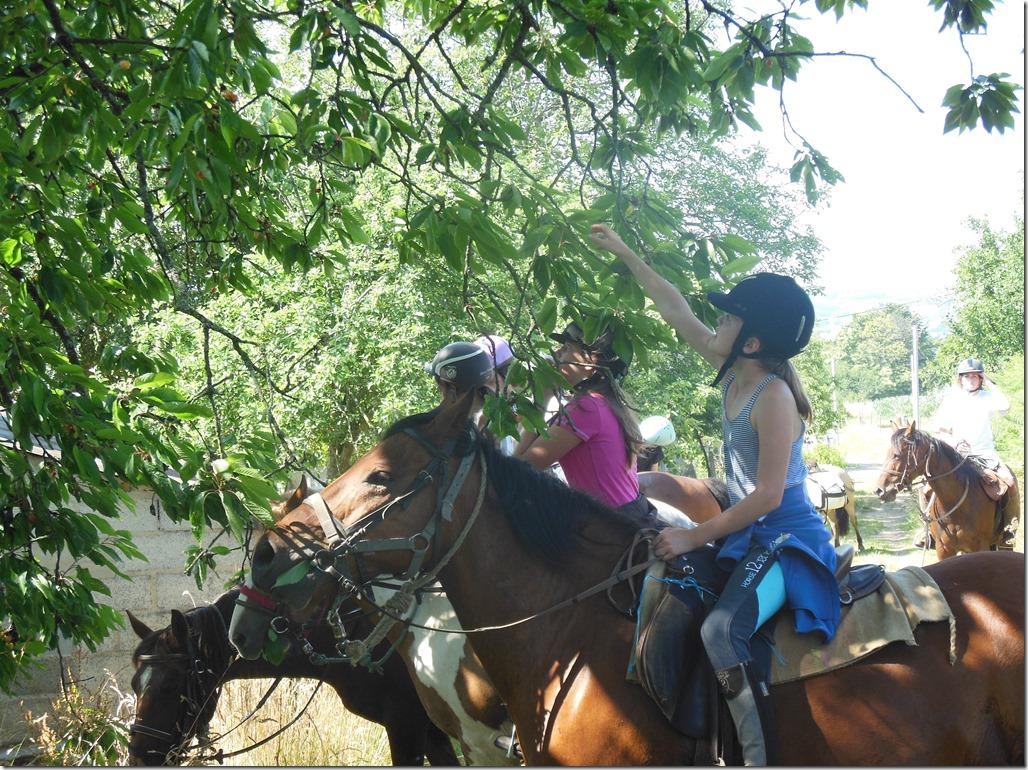 rando cheval 4
