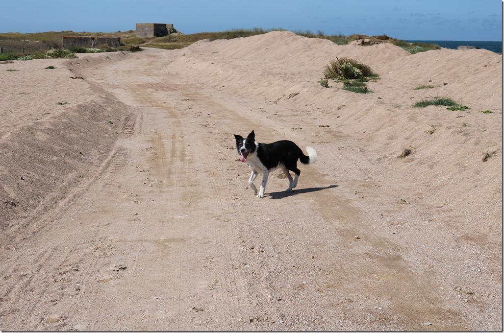 vacances chien