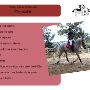 sommaire fiches dressage
