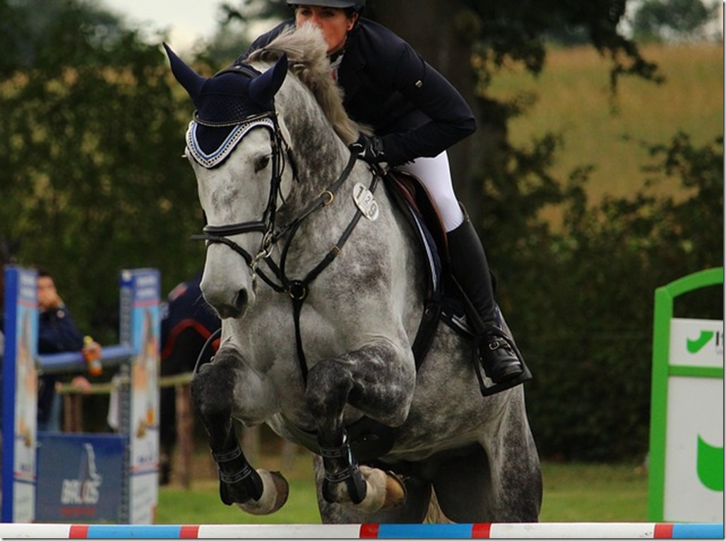 cheval obstacle saut